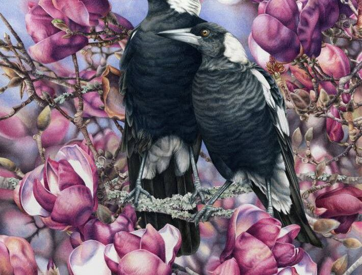 Heidi-Willis_Bird-Painting_watercolour_magpies