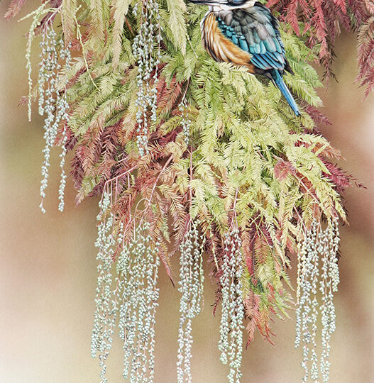 Heidi Willis_artist_Sacred Kingfisher Taxodium distichum_bird painting