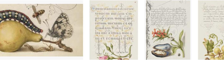 botanical illustration_calligraphy