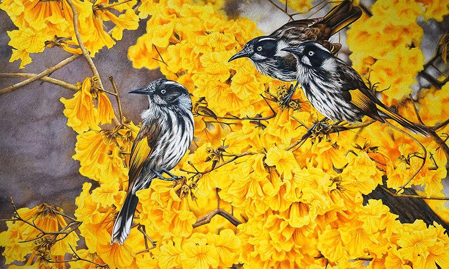 Heidi-WIllis_Bird-Painting_Illustration_Botanical-Artist_Australian_New-Holland-Honeyeater_Tabebuia1