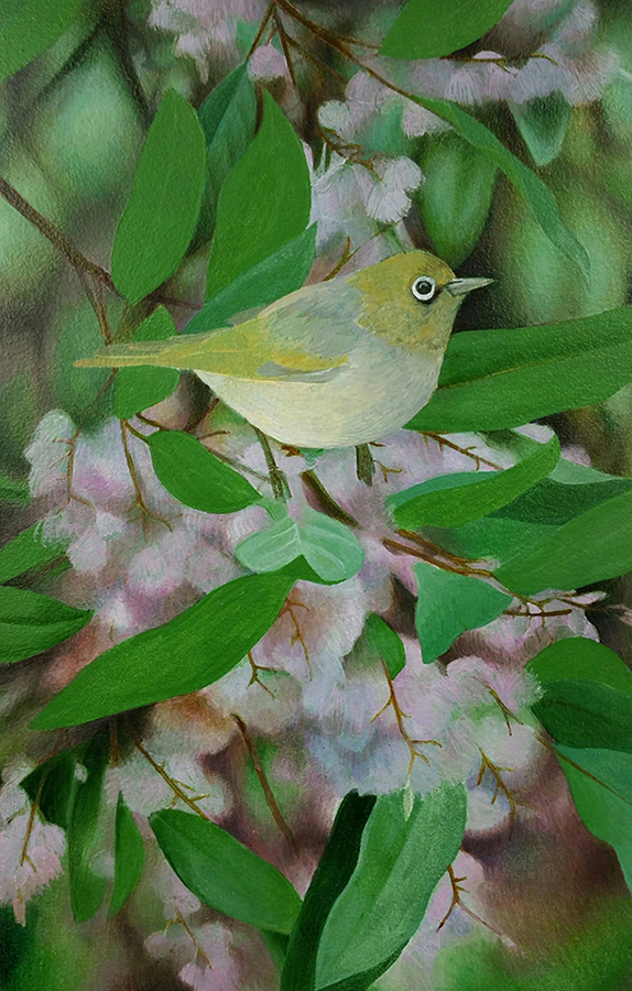 Heidi Willis_Bird painting_silvereye