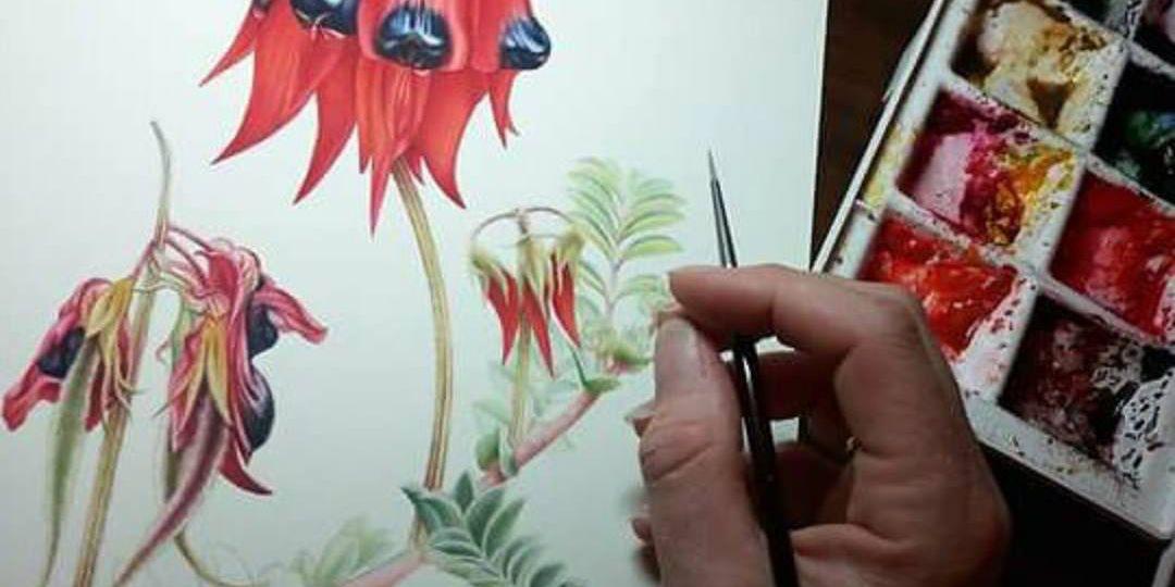 heidi-willis_botanical-artist_australian-floral-emblems
