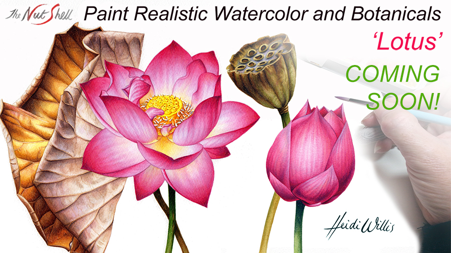 Heidi Willis_Online Painting Tutorial_Lotus_watercolour