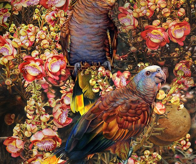 Heidi-Willis_St-Vincents-Amazon_Cannonball_Couroupita-guianensis_Bird-Artist