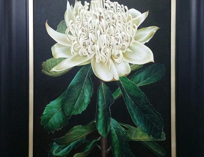 Heidi Willis_White Waratah_botanical art