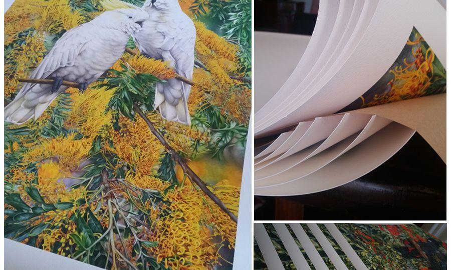 heidi-willis_prints_australian-bird-painting
