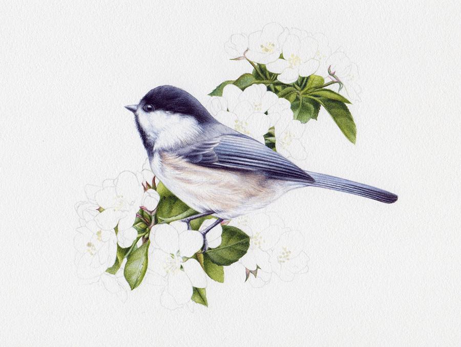 artist_heidi willis_Chickadee painting_leaves_watercolor