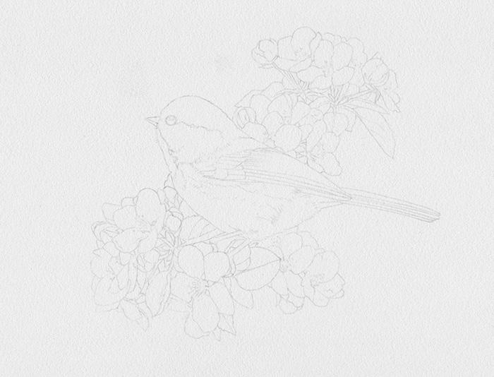 artist_heidi willis_chickadee painting_watercolour_illustration