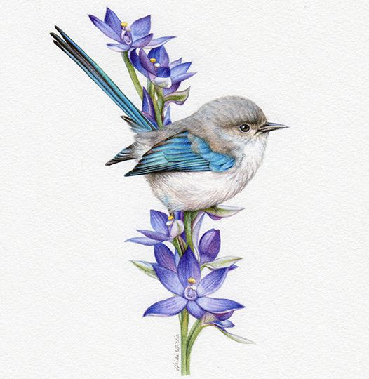 artist_heidi willis_wren painting_watercolour_bird illustration