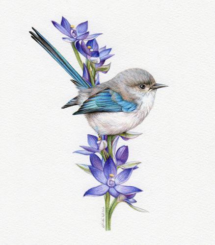'Splendid Wren and Blue Sun Orchid' in Watercolour