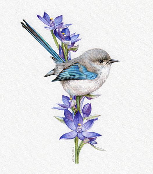 artist_heidi willis_wren painting_watercolour_bird illustration