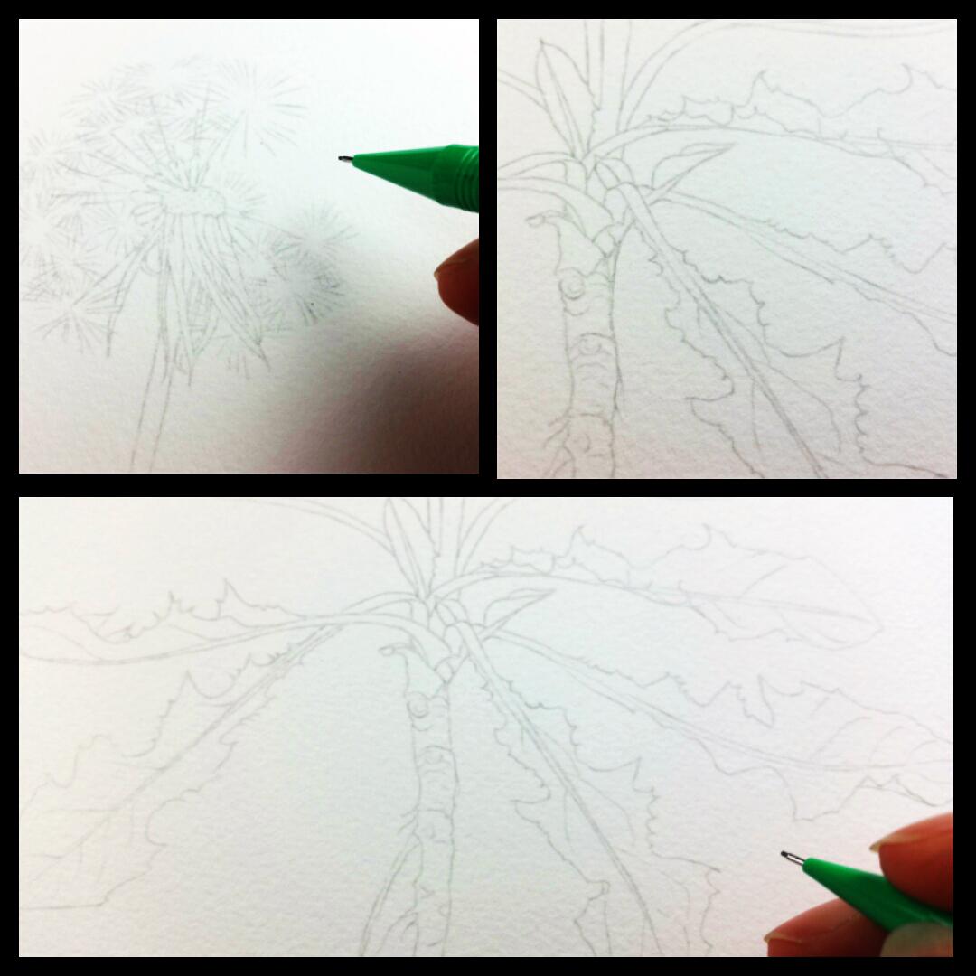 dandelion_heidi willis_botanical illustration