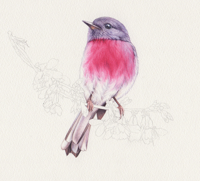 fb_heidi willis_bird artist_watercolour illustration_rose robin_painting
