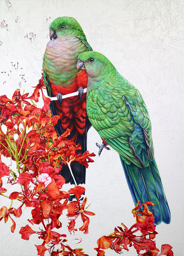 heidi willis_King parrots_bird painting
