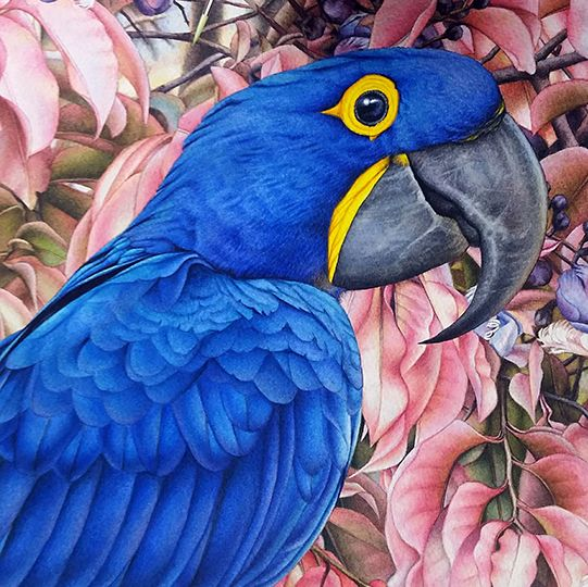 heidi willis_artist_bird painting_hyacinth macaw_watercolor
