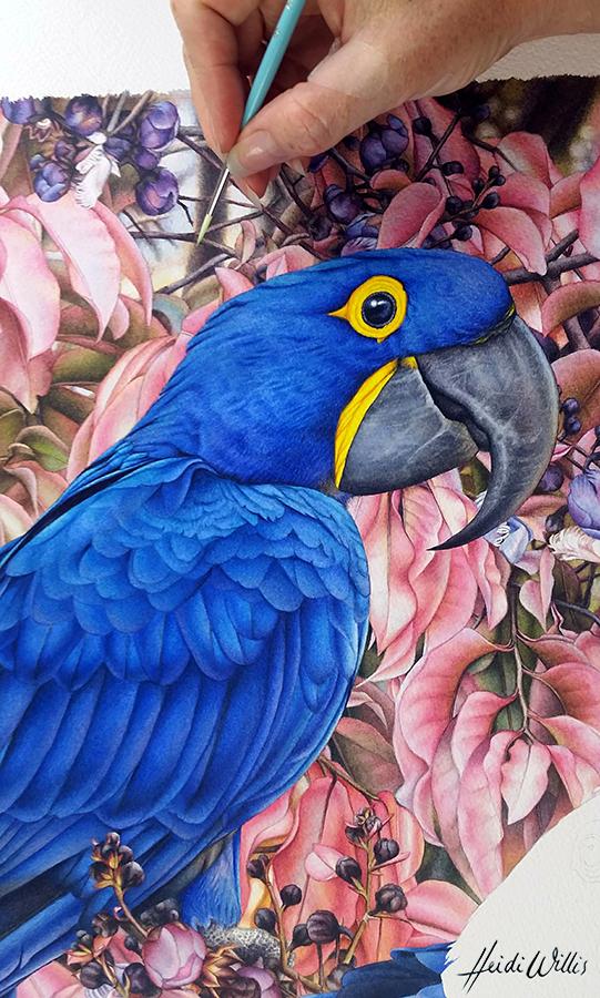 heidi willis_artist_bird painting_hyacinth macaw_watercolor