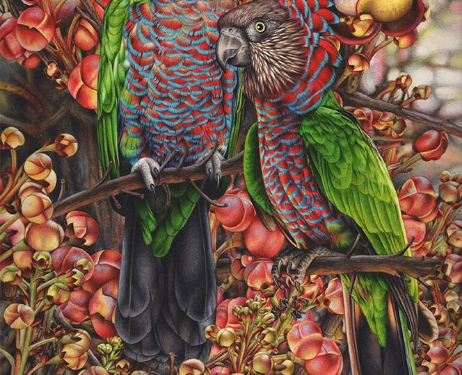 heidi willis_artist_bird painting_red fan parrots