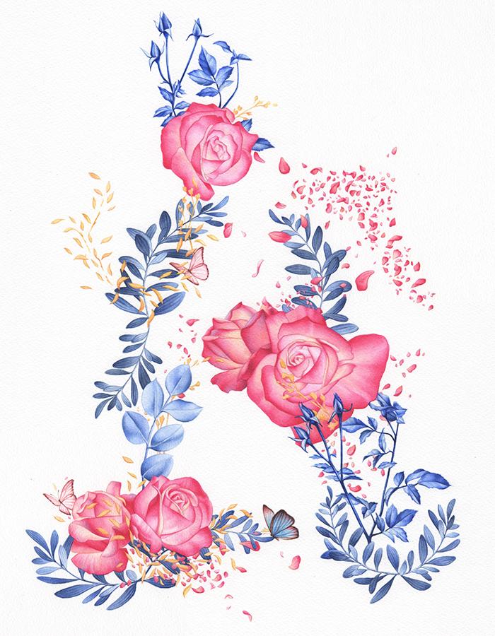 heidi willis_artist_botanical illustration_Jacobs Creek_wine label_watercolour_rose painting
