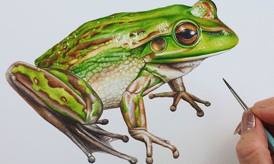 heidi willis_artist_illustrator_Frog_painting_watercolour