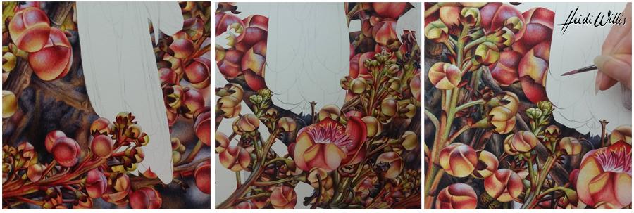 heidi willis_artist_red fan parrot_watercolour_bird painting copy