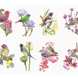 heidi willis_artistfinch illustrations_watercolour_bird painting