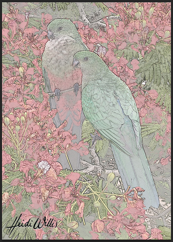 heidi willis_bird artist_king parrot
