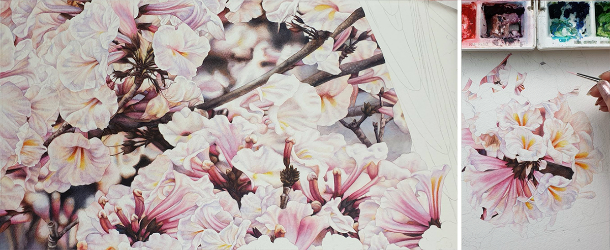 heidi willis_bird artist_painter_watercolour_botanical_tabebuia