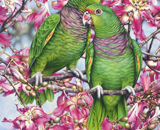heidi willis_bird painting_artist_watercolor_amazon_ceiba_parrots