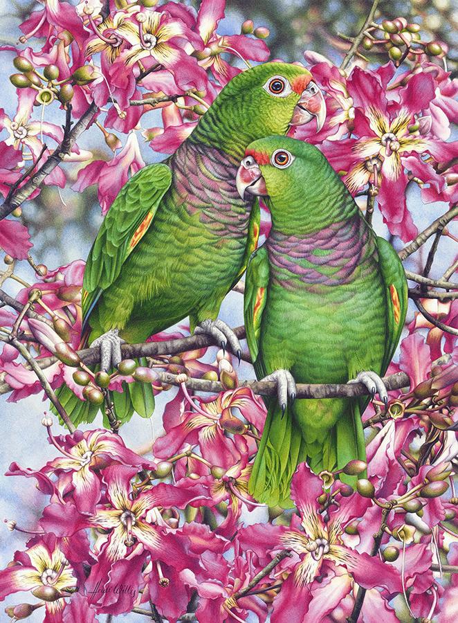 heidi willis_bird painting_artist_watercolor_amazon_ceiba_parrots