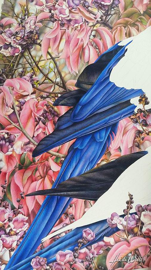 heidi willis_bird painting_botanical artist_natural history