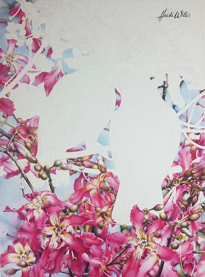 heidi willis_bird painting_ceiba_watercolour