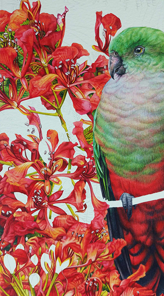 heidi willis_bird painting_king parrots_watercolour