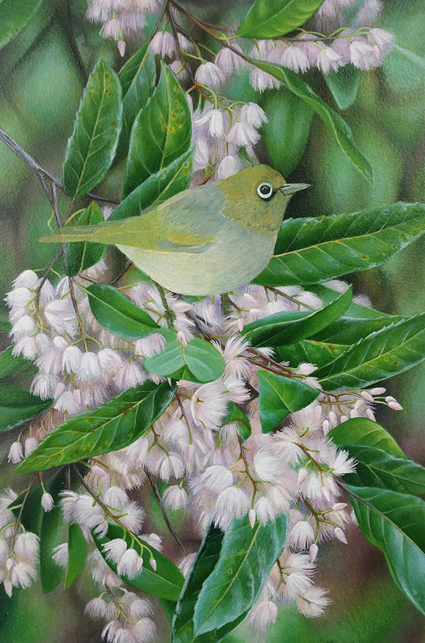 heidi willis_bird painting_silvereye_acrylics