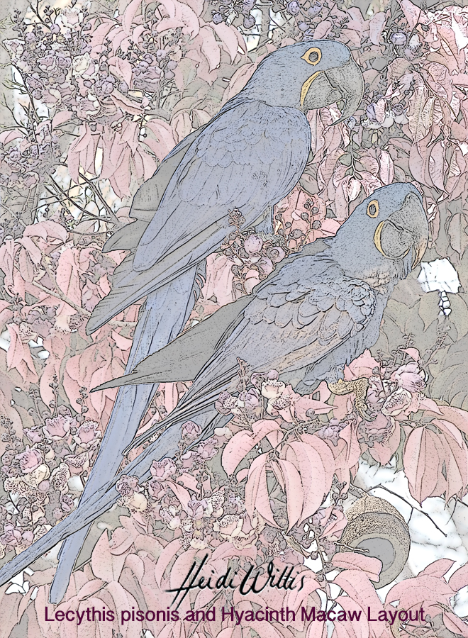 heidi willis_bird painting_watercolour_Lecythis pisonis_Hyacinth Macaw