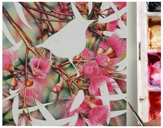 heidi willis_bird painting_watercolour_artist_australian natural history