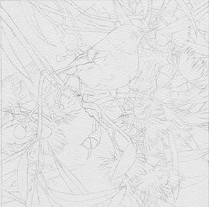 heidi willis_bird painting_watercolour_drawing