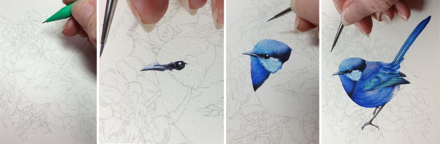 heidi willis_blue wren_painting_watercolour bird artist