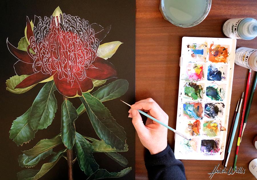 heidi willis_botanical artist_waratah