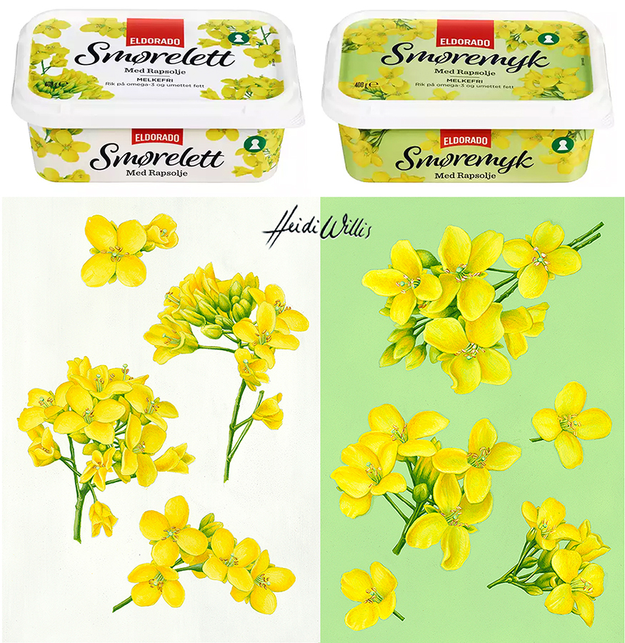 heidi willis_illustration_food_packaging_canola_fruit_botanical artist_eldorado