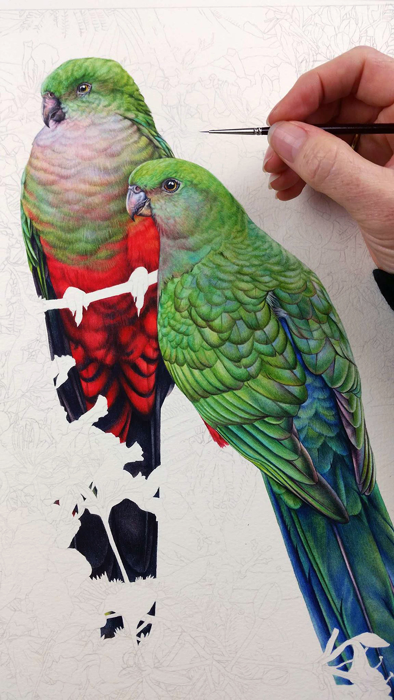 heidi willis_king parrot_bird artist