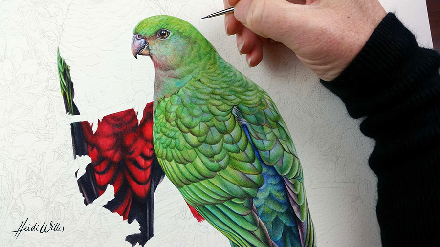 heidi willis_king parrot_watercolour_bird painting