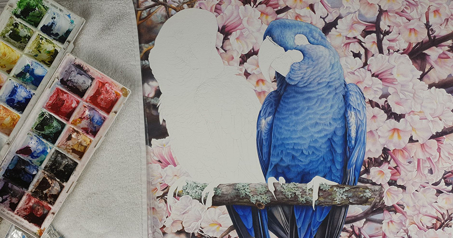 heidi willis_lears macaw painting_bird artist_watercolour