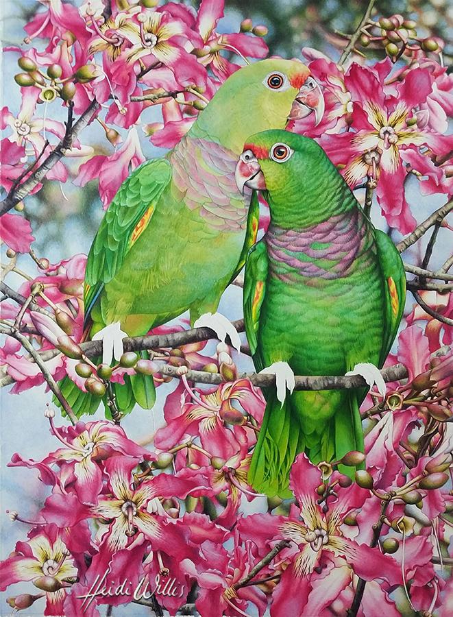heidi willis_natural history artist_watercolor_bbird painting