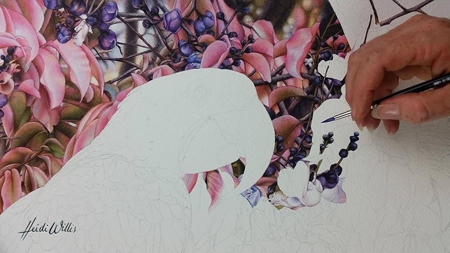 heidi willis_natural history_bird painting_botanical