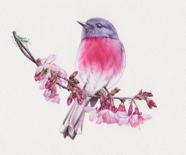 Blossom and Rose Robin Painting – 'The Bird and the Bee'