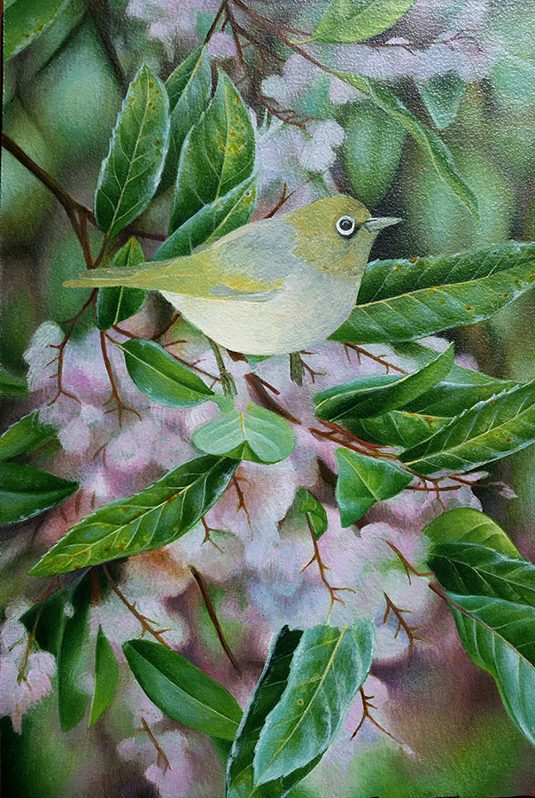 heidi willis_silvereye_bird painting