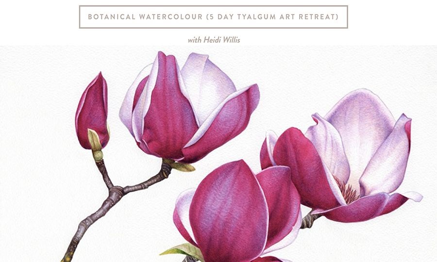 heidi willis_watercolour_botanical art_painting class