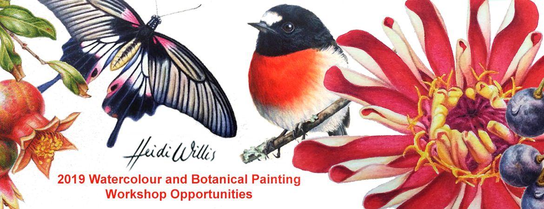 heidi willis_watercolour_botanical_painting class_workshops