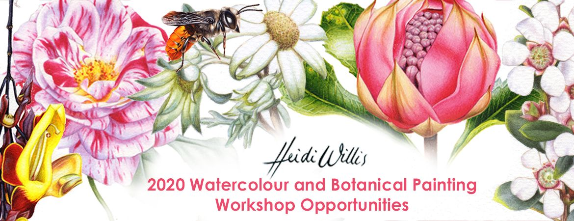 heidi-willis_watercolour_botanical_painting-class_workshops_2020