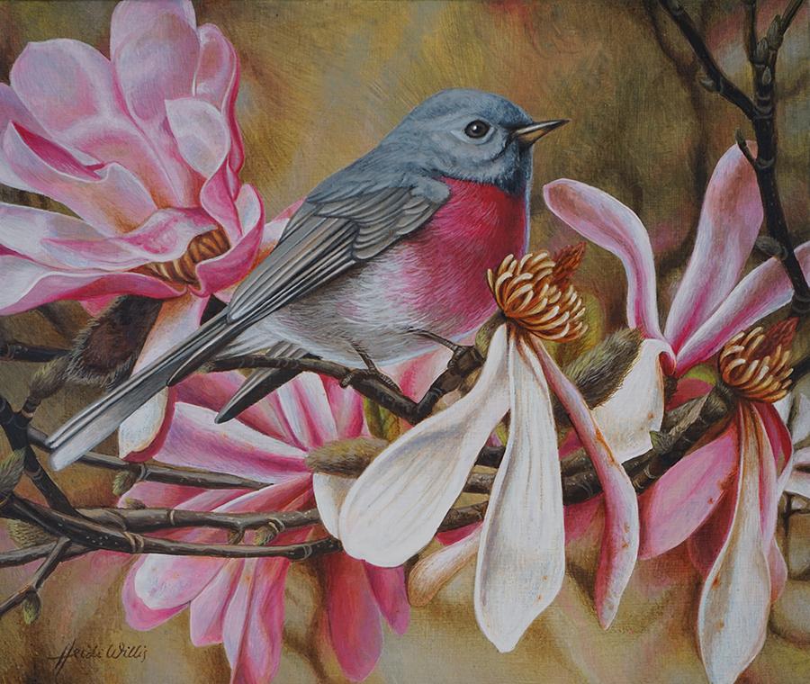 s_heidi willis_bird painting_rose robin_magnolias
